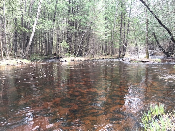 Land for Sale - North Woods Wi