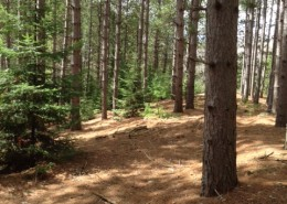 Lot 11, Old Orchard Trail (3)